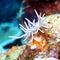 Stock Image : Nudibranch
