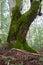 Stock Image : Old tree
