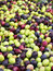 Stock Image : Olives ready to processing