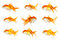 Stock Image : One goldfish swimming in opposite way