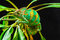 Stock Image : One Yemen chameleon