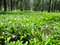 Stock Image : Ooty tea estate