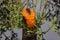 Stock Image : Oozing Orange Slime