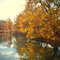 Stock Image : Orange autumn leaves