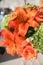 Stock Image : Orange flowers in bloom