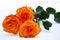 Stock Image : Orange rose isolated