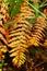 Stock Image :  Oranje varen