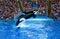 Stock Image : Orca at SeaWorld