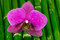 Stock Image : Orchid flower