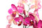Stock Image : Orchid flowers on white background