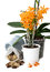 Stock Image : Orchid transplant