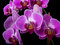 Stock Image : Orchids