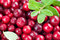 Stock Image : Organic cowberry