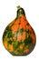 Stock Image : Organic edible gourd