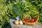 Stock Image : Organic farm products