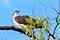 Stock Image : Osprey