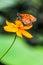 Stock Image : Over Flower