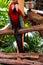 Stock Image :  Pájaro del loro (psittacine)