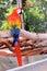 Stock Image :  Pájaro del Macaw del escarlata, la Florida
