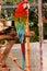 Stock Image :  Pájaro, Macaw del escarlata