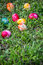 Stock Image : Painted Easter eggs on grass