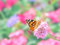 Stock Image : Painted lady butterfly
