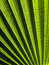 Stock Image : Palm Frond