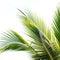 Stock Image : Palm