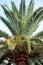 Stock Image : Palm Tree