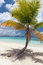 Stock Image : Palm Tree and Coconut