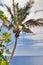 Stock Image : Palm tree on sky background