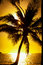 Stock Image : Palm tree at sunset