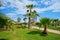 Stock Image : Palm trees near sea.