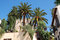 Stock Image : Palm trees in the yard, Granada