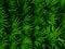Stock Image : Palmyra palm leaves design