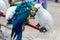 Stock Image : Parrots