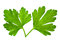 Stock Image : Parsley leaf