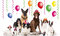 Stock Image : Party pets