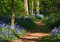 Stock Image : Path through bluebell woods