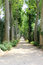 Stock Image : Path with Many Trees on Either Side