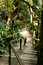 Stock Image : Pathway through tropical jungle
