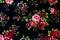 Stock Image : Pattern Flowers