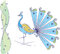 Stock Image : Peacock Artistic Hand Drawn