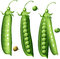 Stock Image : Peas