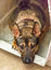Stock Image : Pet dog
