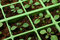 Stock Image : Petunia seedlings in the cell tray (macro)
