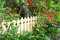 Stock Image : Picket fence