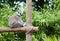 Stock Image : Picture of a lemurien maki catta