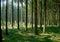 Stock Image : Pine and fir