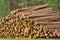 Stock Image : Pine timber